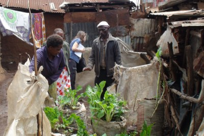 Urban gardening with spinach and kale in Kibera, one of Nairobi's largest slums.