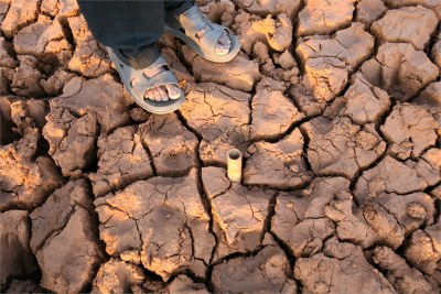 The drought - the worst since 1982 - has claiming thousands of livestock in North West province, Deutsche Welle has said (file photo).