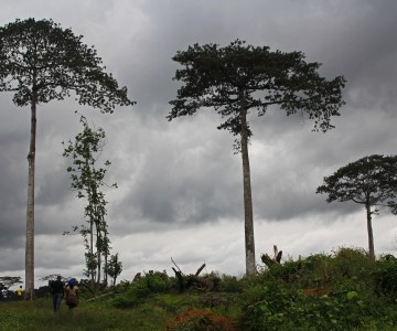 African Governments Giving Land Away Quickly, Recognizing Land Rights Slowly