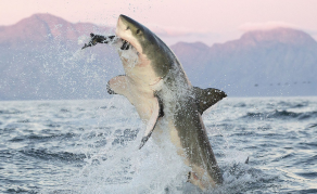 Shark Attacks Teenager in South Africa