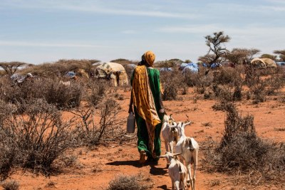 Livestock raising communities are particularly vulnerable to climate change.