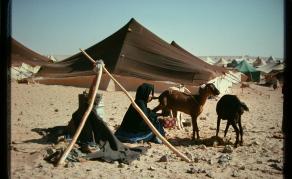 Western Sahara - UN Supports Envoy's Bid to Set Up Negotiations