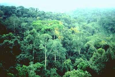 A travers ses forets denses, le Congo regorge d'un potentiel inestimable de carbone