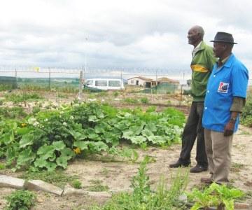 Hlumani community garden, Khayelitsha