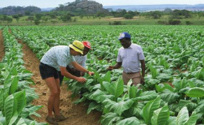 Zimbabwe Govt Ready to Seize Idle Land Owned By Top Allies