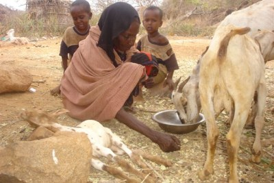 Prevalent drought in Mandera, in the northeast, has led to severe water shortage which has caused livestock deaths (file photo).