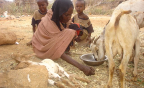 Kenya Faces Worst Drought in Over 3 Decades