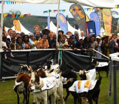Uganda Traditional Goat Ceremony