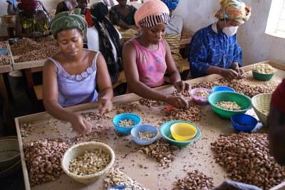 Photo d'illustration - Femmes travaillant dans une société de transformation de l'anacarde.