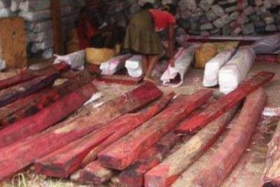 Bois de rose - Selon les organisations qui œuvrent pour l'environnement, le contexte politique actuel est propice à l'augmentation des exportations illicites de bois précieux.