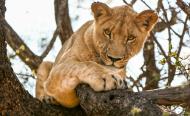 14 Lions Escape South African Game Park