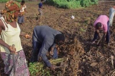 Cote d'ivoire: Agrobusiness