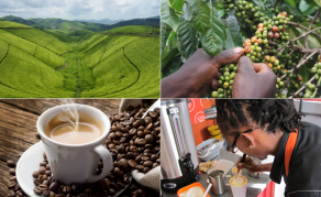 Lightbulb Moment - Developing a Coffee Tourism Market in Ethiopia