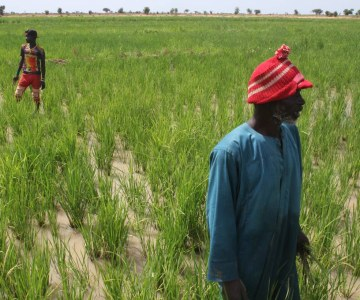 Mali Villagers Enlist Irrigation to Ward Off Extremism