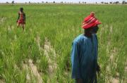 Adaptation de l'agriculture africaine aux changements climatiques