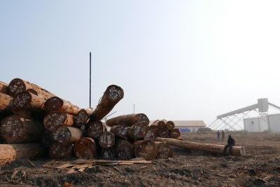 Toxic Trade: Forest Crime in Gabon and the Republic of Congo and the Contamination of the US Market