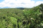 Afrique Centrale - Six pays, une forêt, un avenir commun