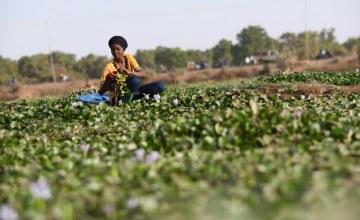Burkinabe Engineer Turns Water Hyacinth Into Gold Mine