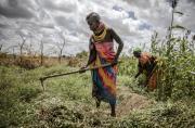 La FAO invite à soutenir davantage la réserve phytogénétique