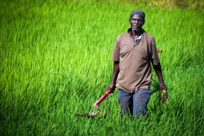 A smallholder farmer in northern Ghana (file photo).