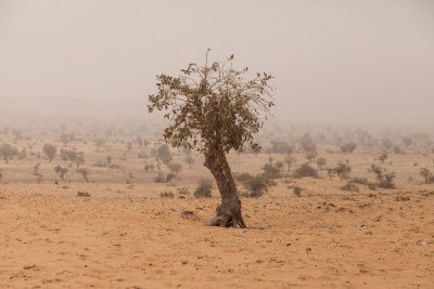 A tree in a desertic area in central Sahel (file photo).