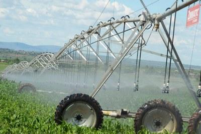 Nasho Solar-Powered Irrigation Scheme in Kirehe District (file photo).