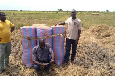 Des responsables de la Coopérative Mitiri des Jeunes Producteurs de Riz de Bagre, au Burkina Faso posant au milieu d'un champ de riz